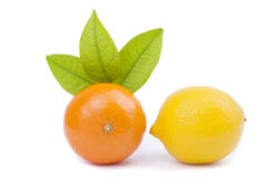 Tangerine and lemon Royalty Free Stock Photography