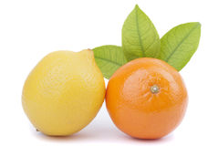 Tangerine and lemon Royalty Free Stock Image