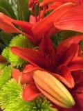Tangerine-Lilie Lizenzfreie Stockfotografie