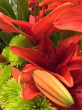 Tangerine Lily Royalty Free Stock Photography