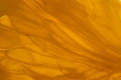 Tangerine macro Stock Photography