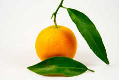 Tangerine, mandarin, clementine isolated on white Royalty Free Stock Photography