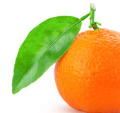 Tangerine or mandarin fruit with green leaf Royalty Free Stock Images
