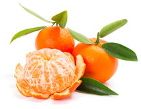 Tangerine or mandarin fruit with leaves Stock Images