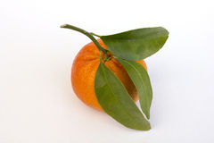 Tangerine or mandarin Royalty Free Stock Photos