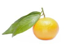 Tangerine or mandarin isolated on white background Royalty Free Stock Photos