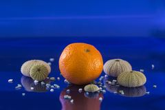 Tangerine with marine satellites in a huge blue. Composition with a tangerine, several sea urchin shells and small stones on a blue endless background stock photo