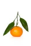 Tangerine mit Blatt Lizenzfreies Stockfoto