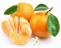 Tangerine mit Segmenten stockbild