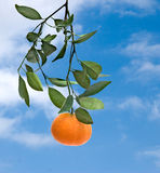 Tangerine On Sky Background Royalty Free Stock Photography
