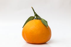 Tangerine over white background Royalty Free Stock Photography