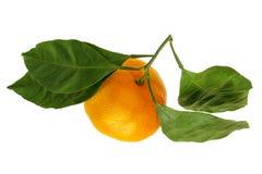 Tangerine owoc z zieleń liśćmi odizolowywającymi na białym tle fotografia royalty free