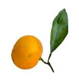Tangerine på vit bakgrund Arkivbild