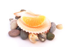 Tangerine in sea shell isolated on white. Piece of tangerine in the sea shell on sea stones isolated on white background Royalty Free Stock Image