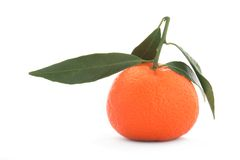 Tangerine sheet green Royalty Free Stock Photos