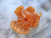 Tangerine on a snow Royalty Free Stock Photo