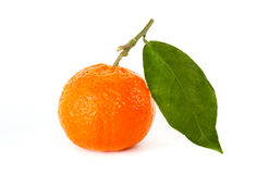 Tangerine with stem and leaf Stock Photos