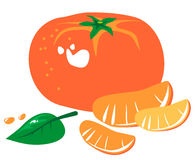 Tangerine. Stylized tangerine and slices isolated on a white background stock illustration