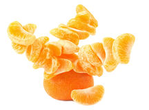 Tangerine tree. Creative tangerine tree isolated on white background stock photography