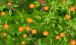Tangerine tree foliage seamless background. Vector drawing vector illustration