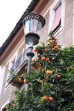 Tangerine tree and street lamp in the Roman street Stock Images