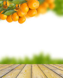 Tangerine trees Stock Photos