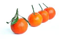 Tangerine - tropical fruit. Four tangerines on white background Stock Image