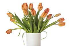 Tangerine tulips in white vase isolated Royalty Free Stock Photo