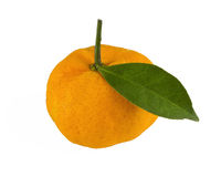 Tangerine on white Stock Image