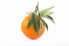 Tangerine. On a white background Stock Images