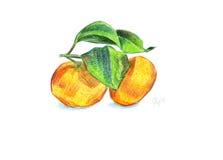 Tangerine zwei mit Blättern auf einer Niederlassung Lizenzfreies Stockbild
