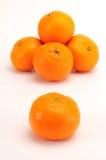 Tangerinegruppe stockfotografie