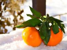 Tangerineleuchtorangeschnee Stockfoto