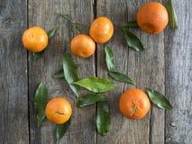 Tangerinen mit Blättern lizenzfreie stockfotografie