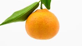 Tangerinen mit Blättern dreht sich stock video