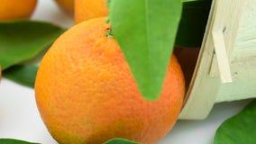 Tangerinen mit Blättern im Korb stock video