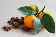 Tangerineniederlassung und gewürzte Stern Anis Lizenzfreie Stockbilder