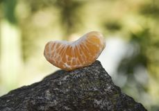 Tangerineorange herauf den Felsen im Park Stockbild