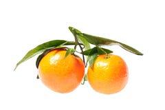 tangerines δύο φύλλων Στοκ φωτογραφία με δικαίωμα ελεύθερης χρήσης