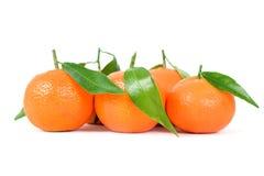 tangerines λευκό Στοκ Φωτογραφία