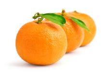 tangerines λευκό Στοκ φωτογραφία με δικαίωμα ελεύθερης χρήσης