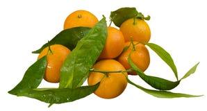Tangerines, μανταρίνι Στοκ φωτογραφία με δικαίωμα ελεύθερης χρήσης