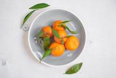 Tangerines με τα πράσινα φύλλα στο άσπρο ξύλινο υπόβαθρο Vertica Στοκ Εικόνα