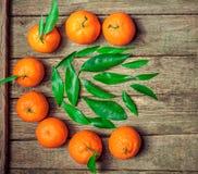 Tangerines πορτοκάλια, κλημεντίνες, εσπεριδοειδή με τα πράσινα φύλλα στοκ εικόνα