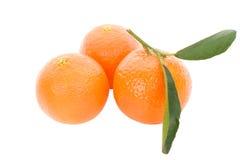 tangerines τρία φύλλων Στοκ Εικόνα