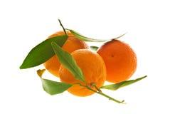 tangerines τρία φύλλων Στοκ φωτογραφίες με δικαίωμα ελεύθερης χρήσης