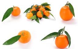 tangerines φύλλων ανασκόπησης λε&upsi Στοκ Εικόνες