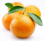 tangerines φύλλων Στοκ εικόνες με δικαίωμα ελεύθερης χρήσης