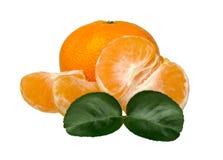 tangerines φύλλων Στοκ Φωτογραφίες
