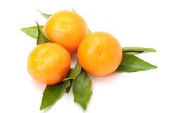 tangerines φύλλων Στοκ Φωτογραφία